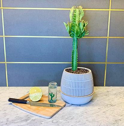 """Cactus """"El Arbol"""""""