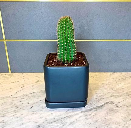 """Cactus """"El Único"""""""