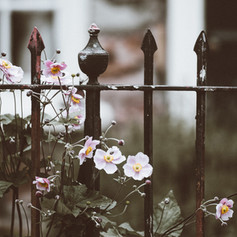 Fence with Flowers.jpg