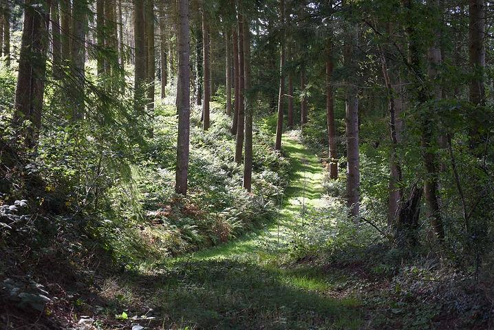 woodland path Don Nelson.jpg