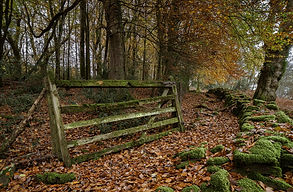 The old gate (82).jpg