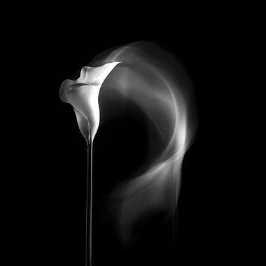 Lily twirl (64).jpg