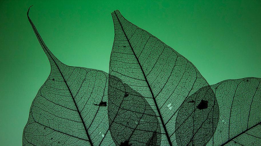 Skelton leaf patterns (60).jpg