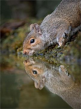 Squirrel (97)3.jpg