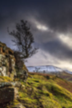 Lone tree growing out of rock with snowy mountain behind