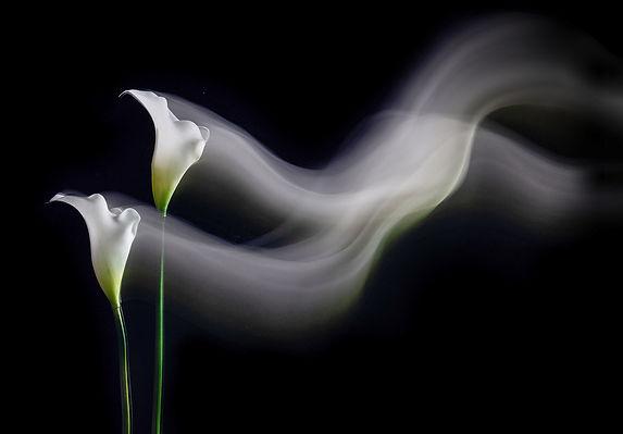 Danncing Lilies (64)-.jpg