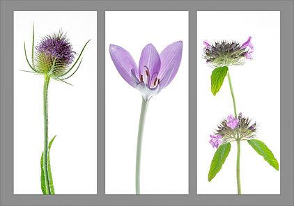 Wild purples (96)3.jpg
