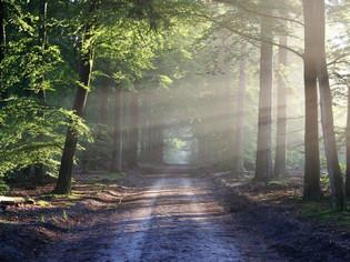 穿越「詩篇」的時空  探索人生的定向、失向、新定向│聚焦聖經