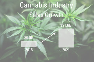 The Growth of the Cannabis Industry