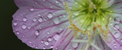 VELLERON-Macro fleurs  54123 - Version 2.jpeg