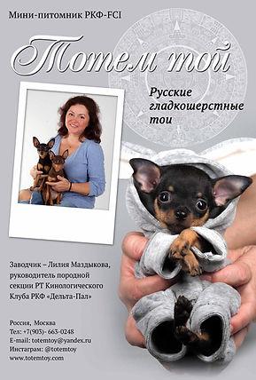 русский той щенки щенки из питомника русский той russian toy  питомник тотемтой kennel club Totemtoy
