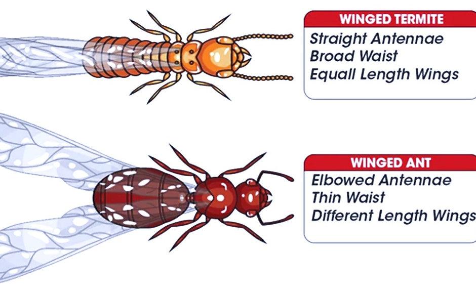 Termite-Ant-Amco-Pest-Services_edited_edited.jpg