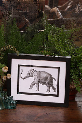 VINTAGE ELEPHANT PRINT