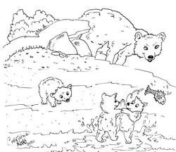 Jeux d'ours