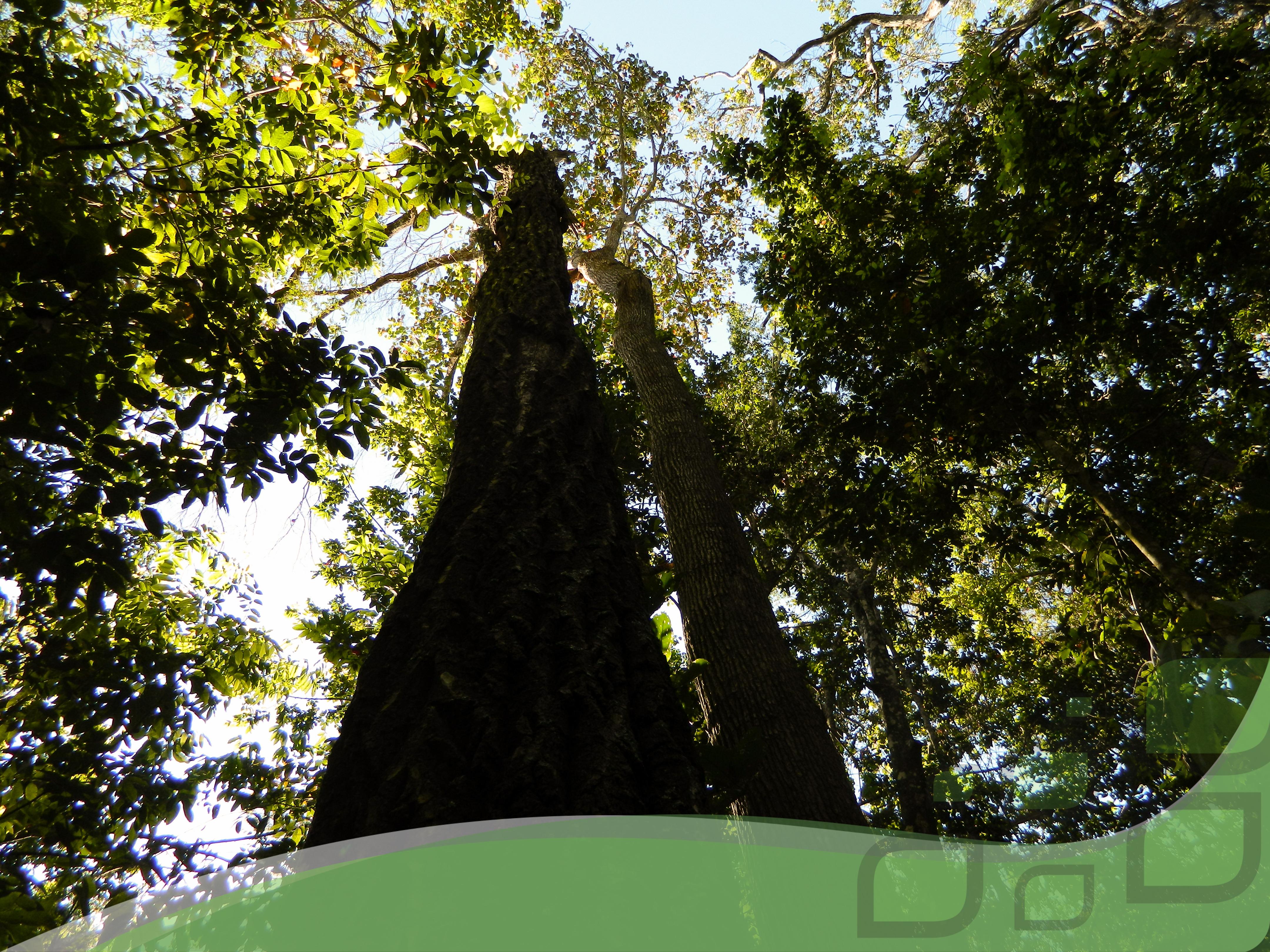 Vegetação de Floresta Estacional