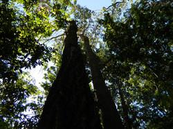 Mapeamento e Inventário Florestal