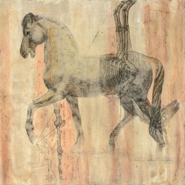 Equine Anatomy III