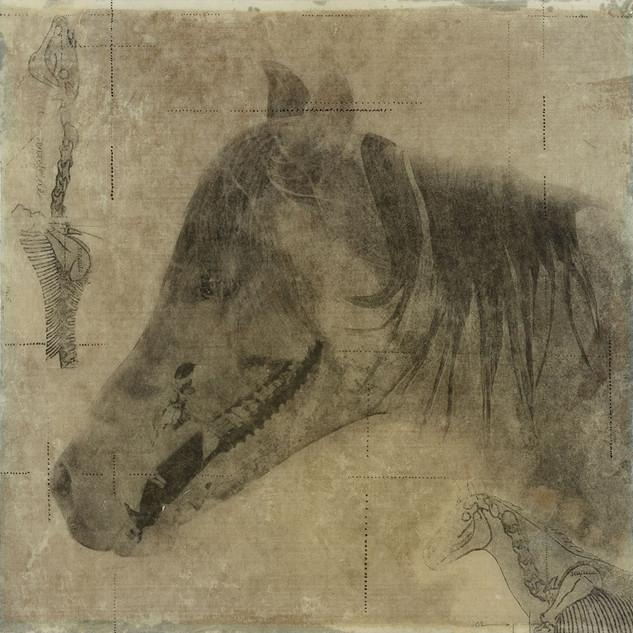 Equine Examination