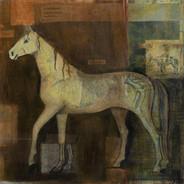Equine Anatomy II