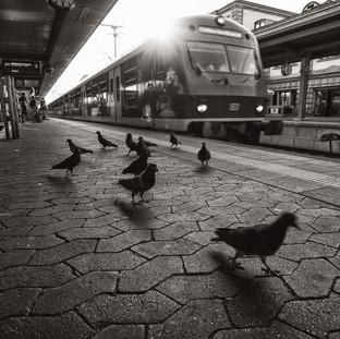Platform Pigeons