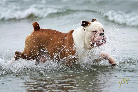 BS:  Bull Splash