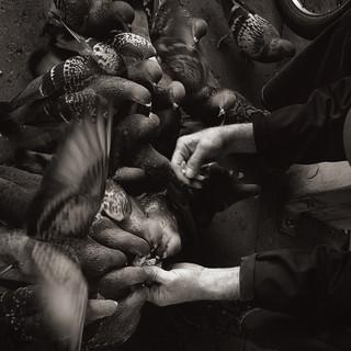 Feeding Hands
