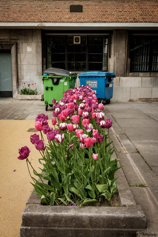 Tulips or Garbage