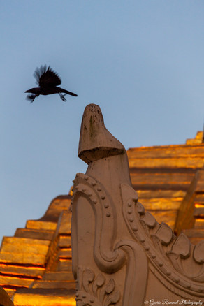 The Temple Crow