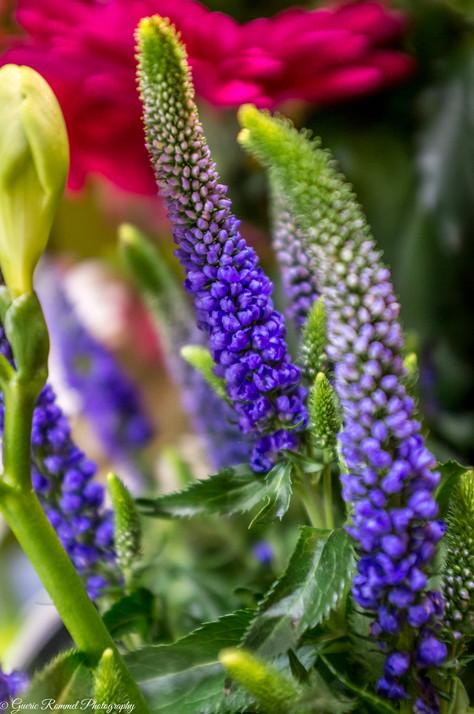 Flowers (purple)
