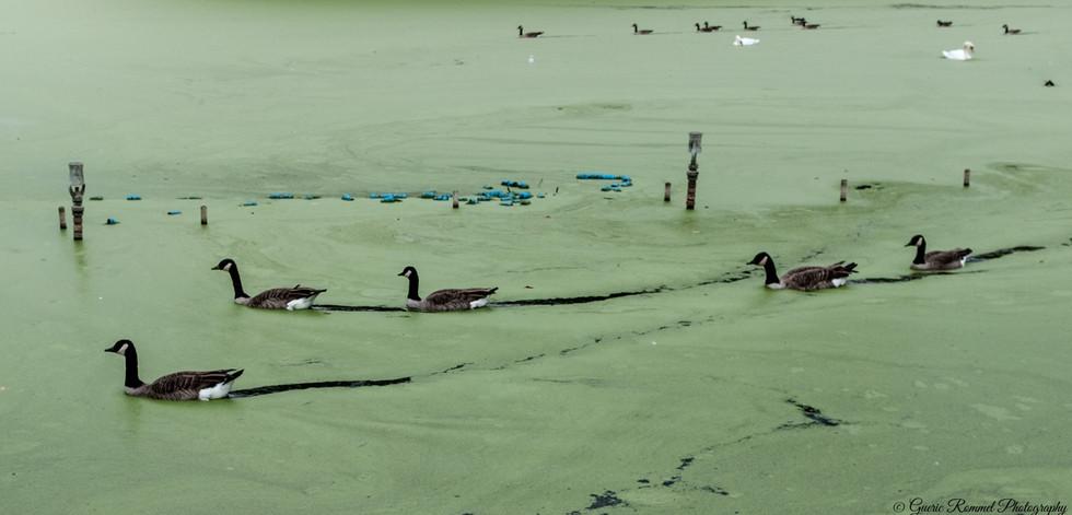 Duck's Passage