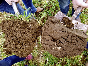 Dirt-shot_soil-health.jpg