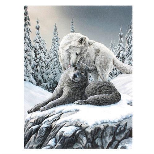 2 Wölfe im Schnee
