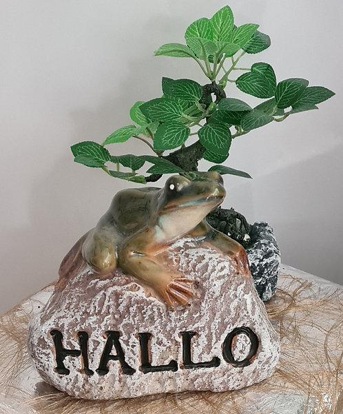 Frosch auf Stein