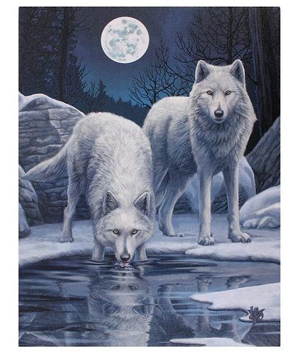 Wöfle im Mondschein