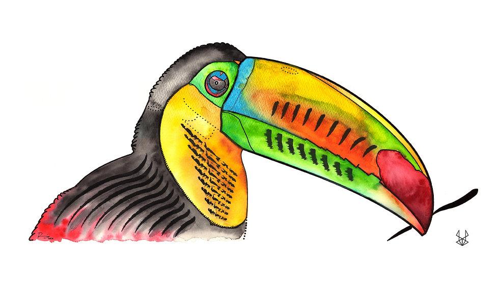 Tucán