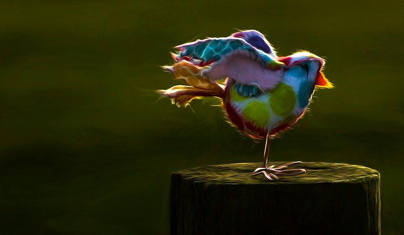 Bird night copy.jpg
