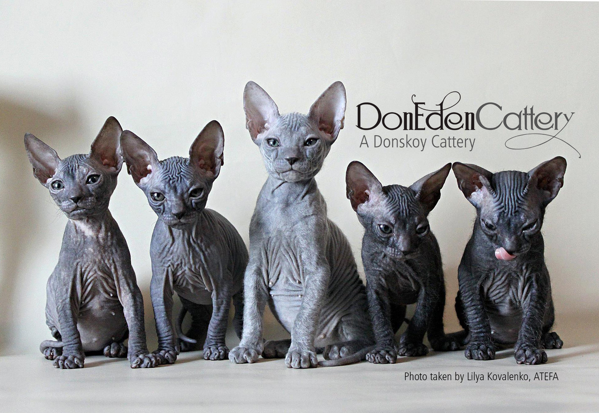 DonEden Cattery