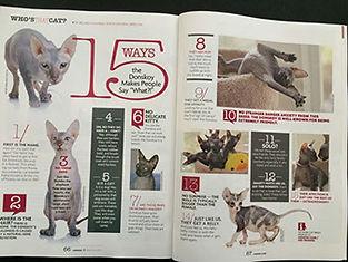 catster magazine spread.jpg