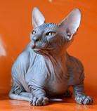 photos_kittens_t_taler_18.jpg