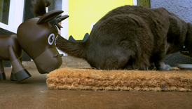Ned tries to remove the mat but the big cat is on it.