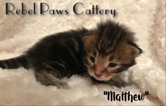 Litter D - Matthew 2