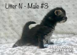 Male 3b