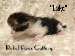 Litter D - Luke 1