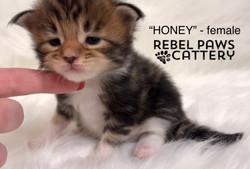 Litter L - Honey 1