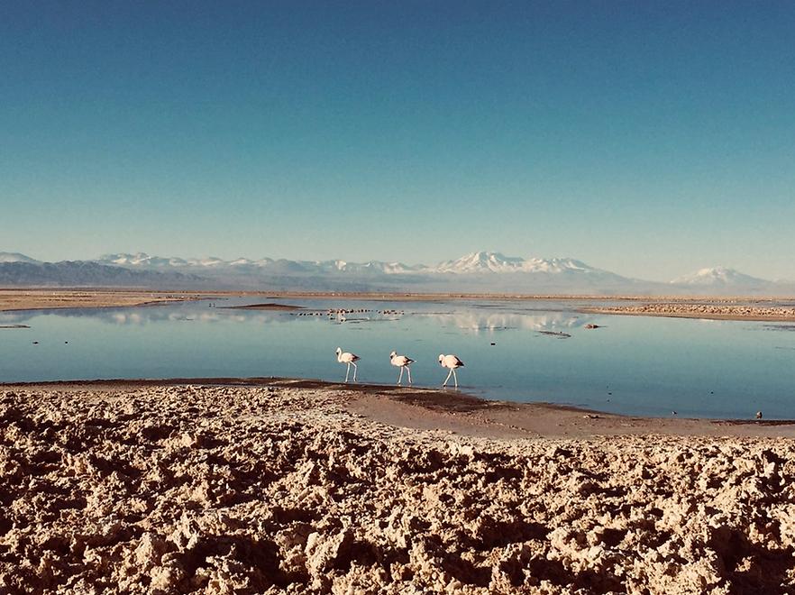 flamingosatacama.png
