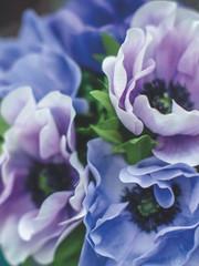 romatic-purple_left.jpg