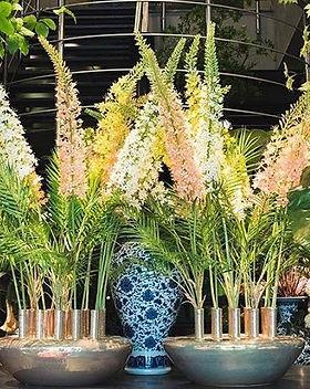 Blumenfeuerwerk Eingang 2.jpg