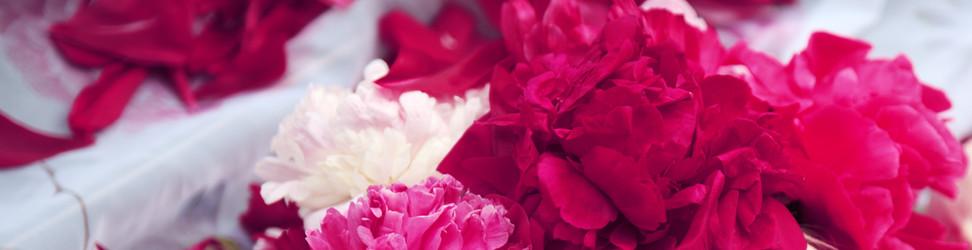 Blumenfeuerwerk Mieten header v1.jpg