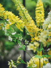 flamboyant_yellow_left.jpg
