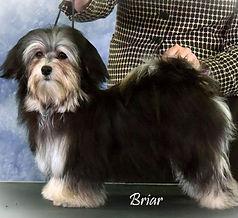 Briar_website.jpg